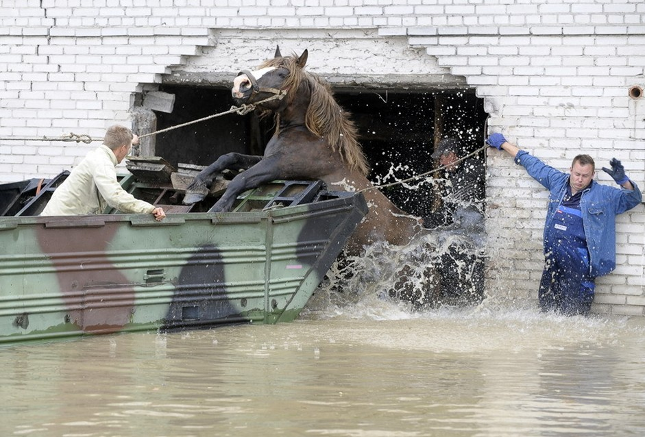 圖片:在波蘭中部被淹村莊 農民們幫一匹馬跳上船