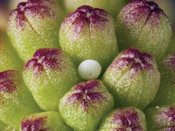 圖片:植物搖籃