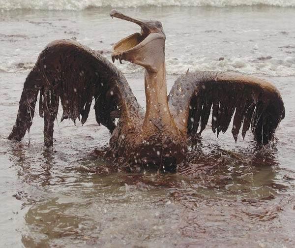 圖片:油中窒息